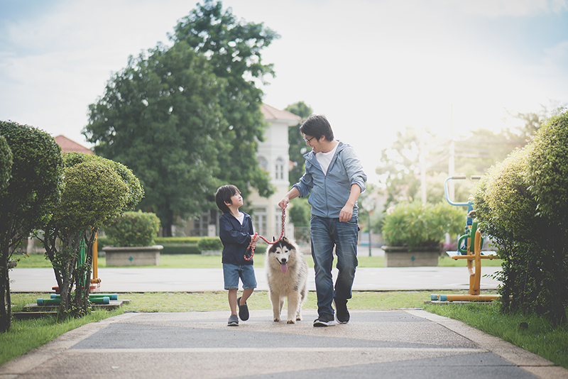 Pet World partners with DKSH to bring pet nutrition to Indonesia