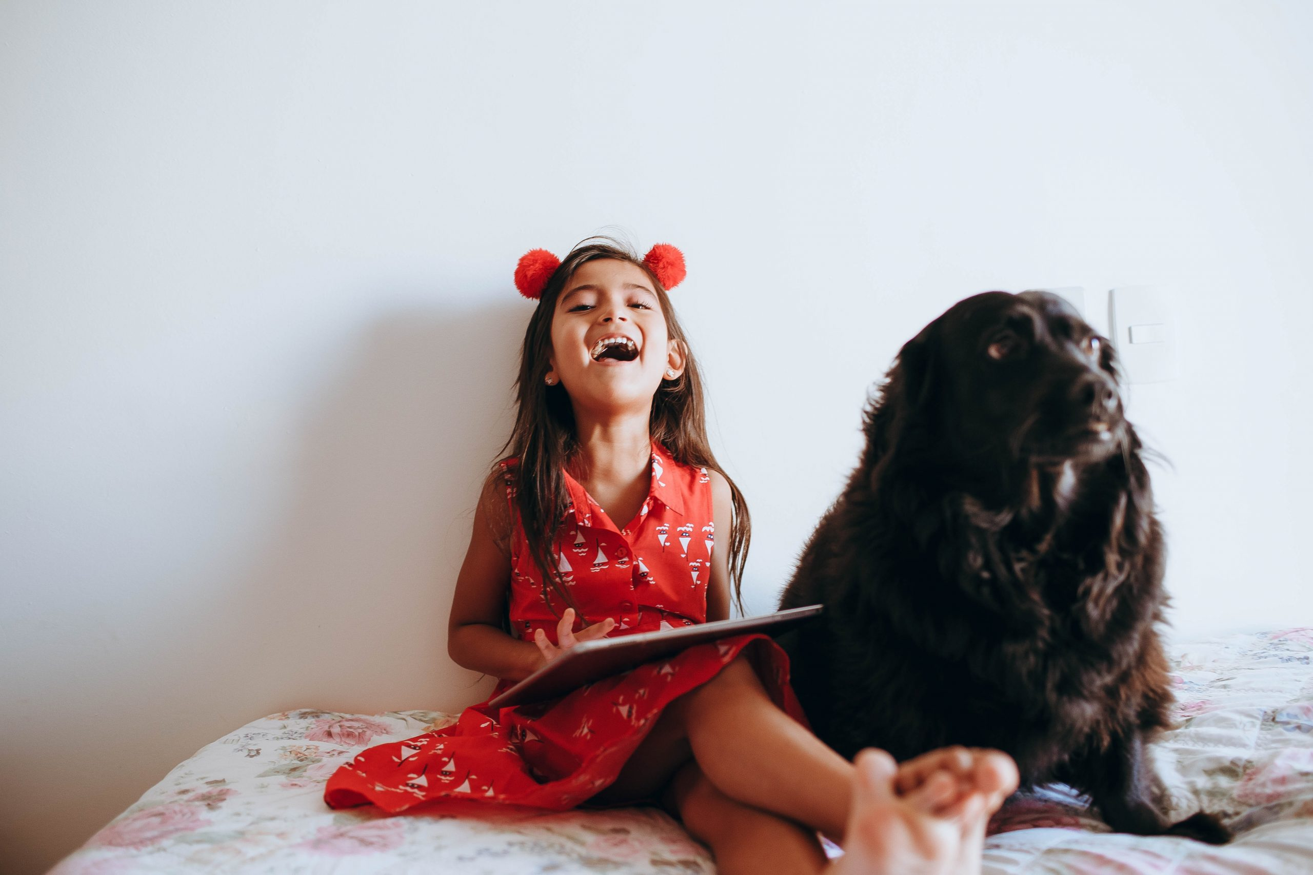 3 Activities to do indoors with your dog